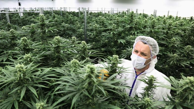Марихуана мира частое курение марихуаны