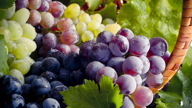 Виноград 🍇 - всё что нужно знать - ответы на популярные вопросы