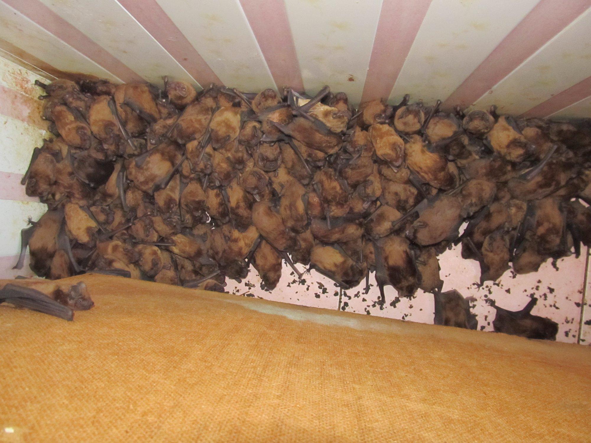 Во львовской квартире нашли 1700 летучих мышей
