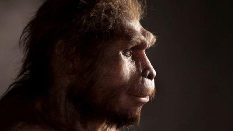 Невероятно: Homo erectus жили значительно дольше, чем считалось