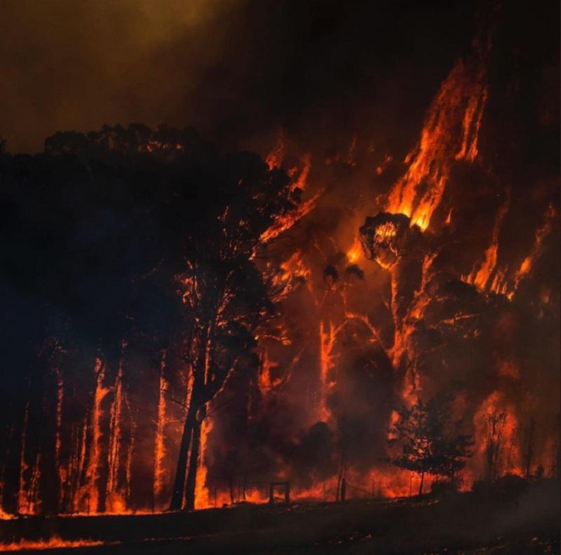 Австралия тонет в огне: что известно о трагедии сегодня - фото 4