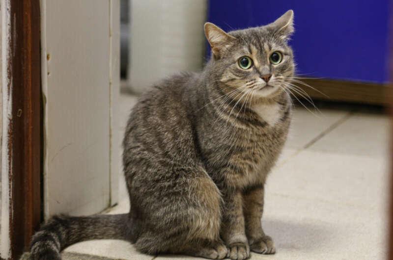 Ветклиника в Украине ищет обнимателя котов-800x530
