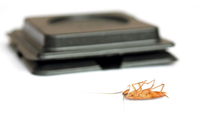 лучшие способы избавления от тараканов