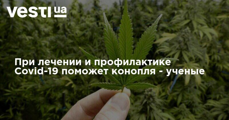 Повышается или понижается давление от марихуаны марихуана в симферополе