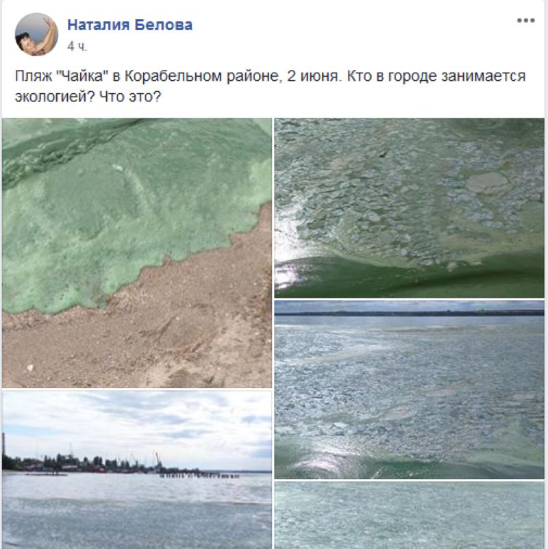 В Николаеве вода на пляже окрасилась в ядовито-зеленый цвет - фото 1