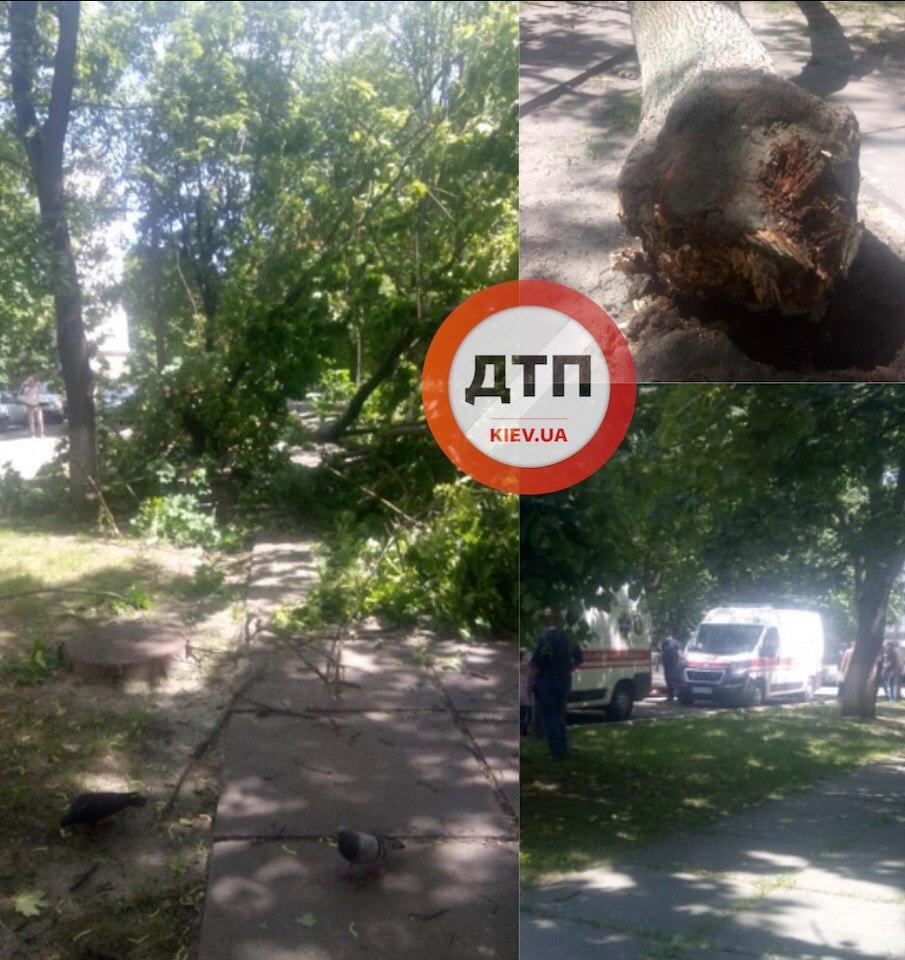 В Киеве дерево упало на парня и девушку, отдыхавших на скамейке - фото - фото 1