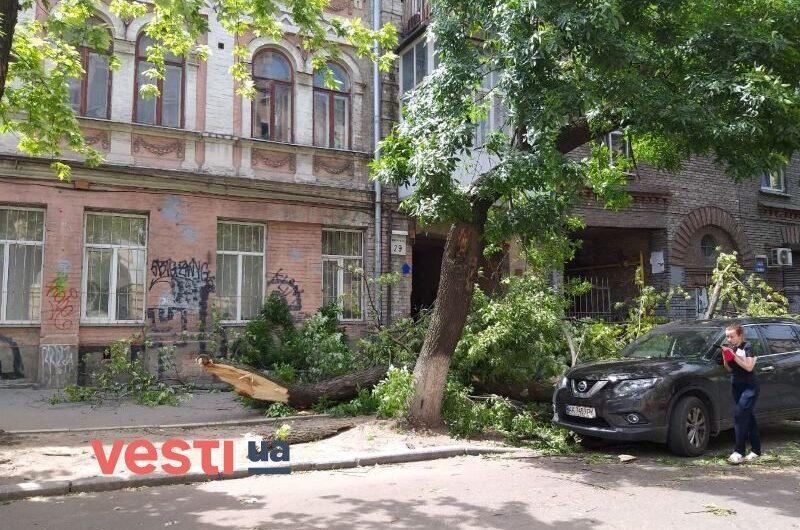 В Киеве упавшее дерево разбило припаркованный автомобиль-800x530
