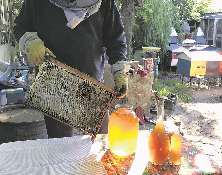 Пасека в Буках, Маньковский район, Черкасская область