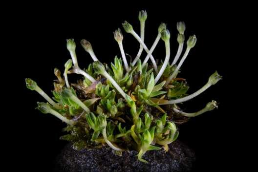 Украинские ученые нашли огромную популяцию цветущих растений в Антарктиде-1200x800