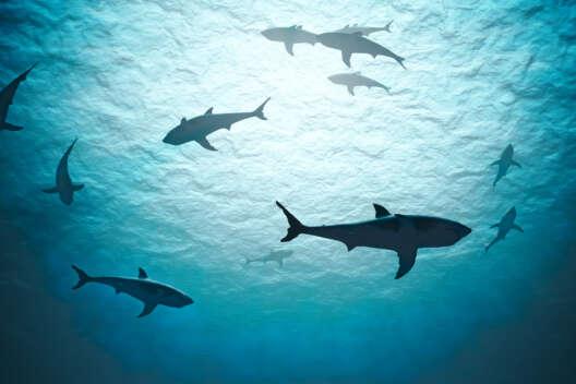 У рифовых акул обнаружили загадочное кожное заболевание – фото-1200x800