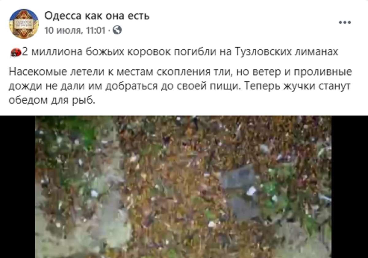 Кусают отдыхающих: украинские курорты атаковали миллионы божьих коровок - фото 1
