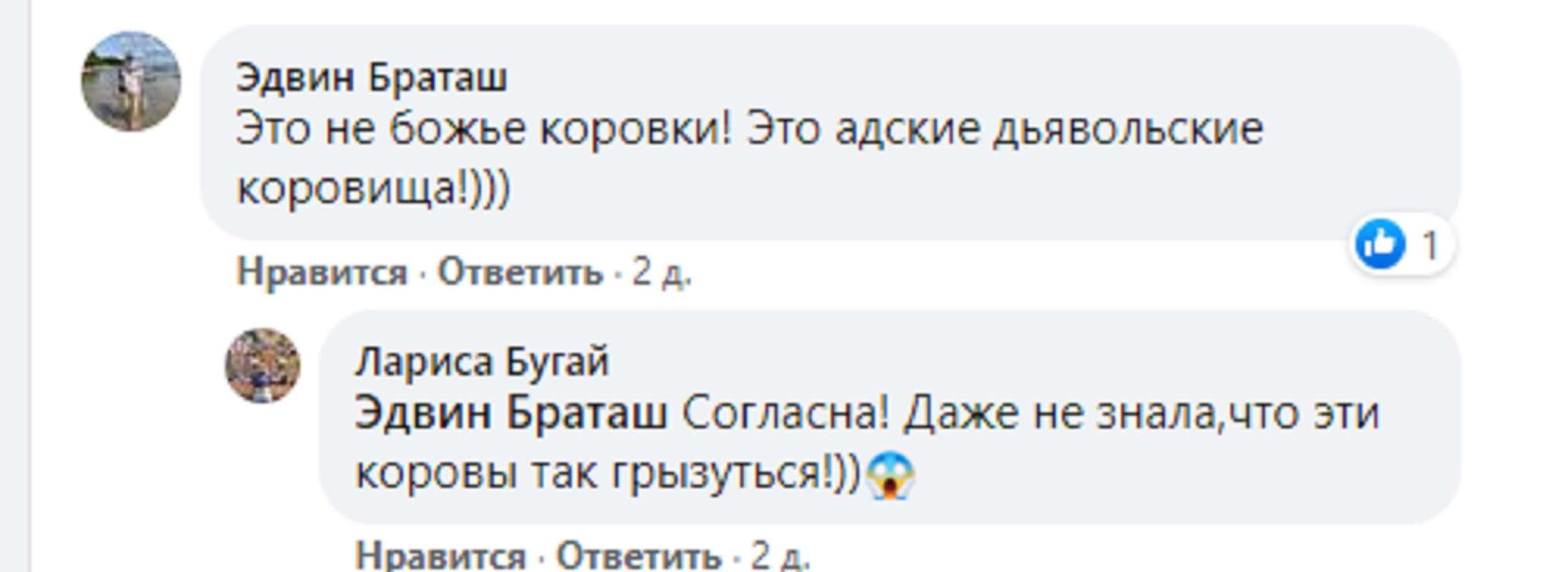 Кусают отдыхающих: украинские курорты атаковали миллионы божьих коровок - фото 2