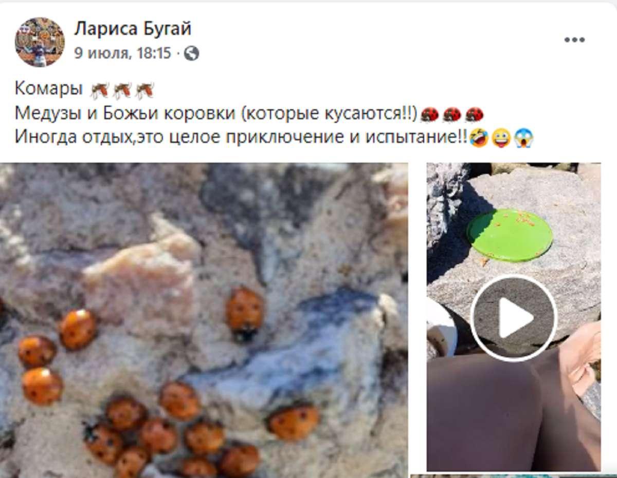 Кусают отдыхающих: украинские курорты атаковали миллионы божьих коровок - фото 3