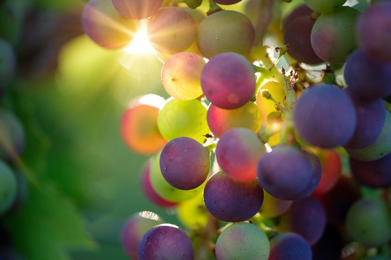 Осеннее изобилие: как выжать максимальную пользу из овощей и фруктов - фото 1