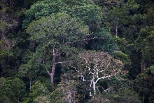 Джунгли Амазонии страдают от небывалой засухи